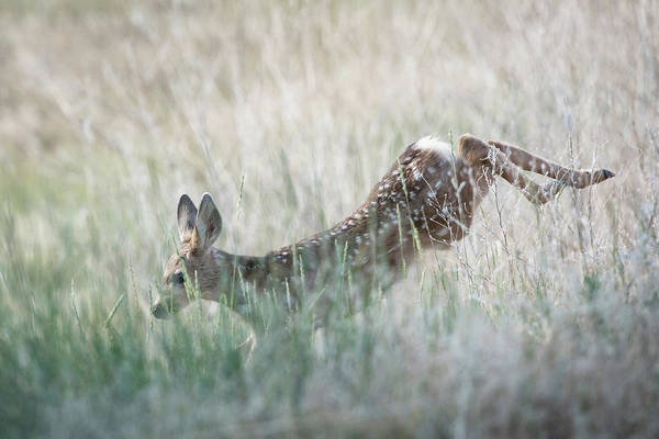 Wall Art - Photograph - Deer In The Field  by Catherine Lau