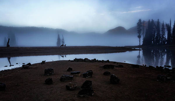 Wall Art - Photograph - Deer In The Mist by Cat Connor