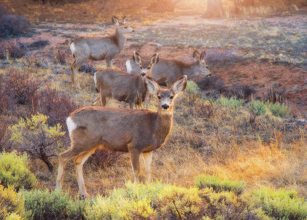Wall Art - Photograph - Deer In The Sunlight by Darren White