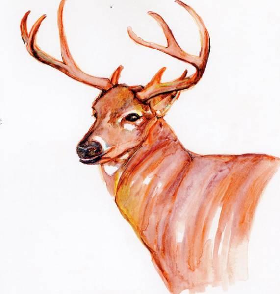 Black Buck Painting - Deer In Watercolor by Anne Seay