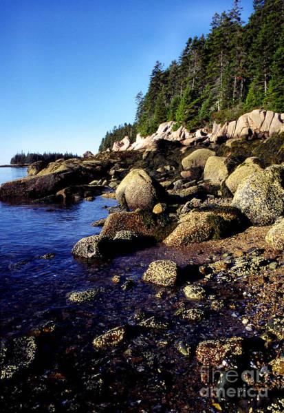 Photograph - Deer Isle Shoreline by Thomas R Fletcher