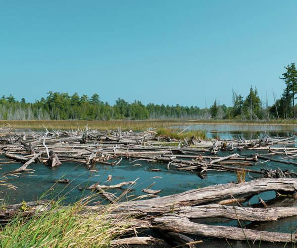 Photograph - Deer Lake Log Jam by Sally Sperry