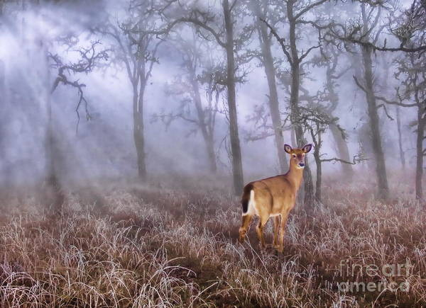 Art Print featuring the photograph Deer Me by Andrea Kollo