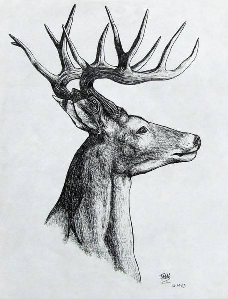 Drawing - Deer by Michael  TMAD Finney