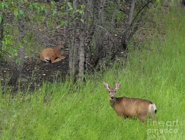Photograph - Deer Mom by Vivian Martin