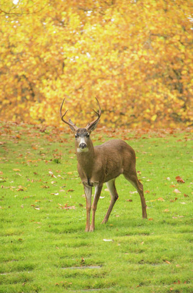 Photograph - Deer One by Marilyn Wilson
