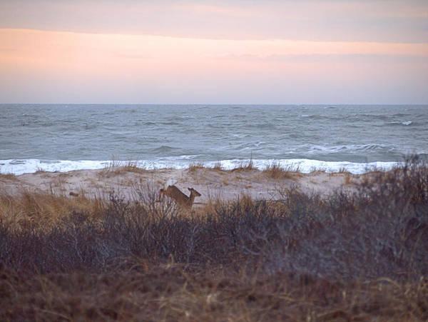 Photograph - Deer Run I I by  Newwwman