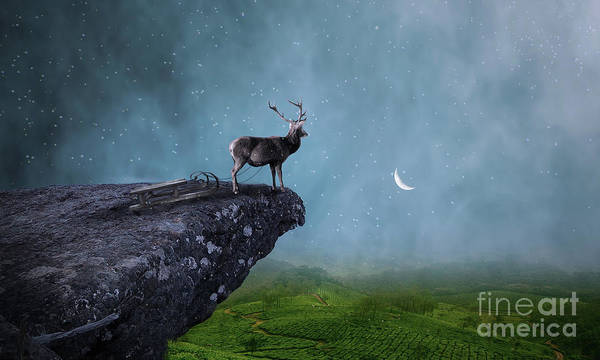 Photograph - Deer by Sajid Ch