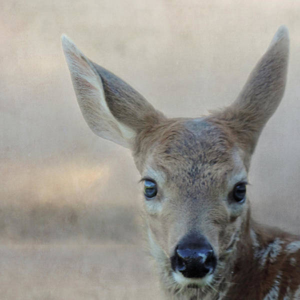 Photograph - Deer Selfie by Sally Banfill