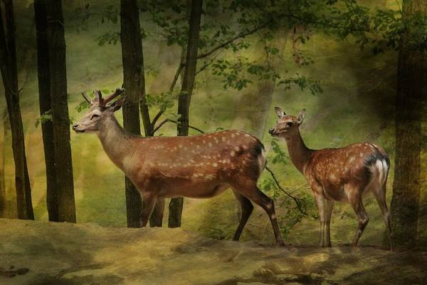 Bambi Mixed Media - Deer Still Life by Heike Hultsch