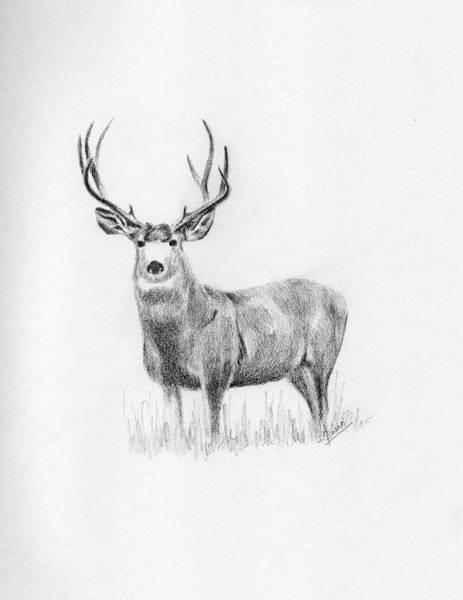 Singh Drawing - Deer by Swati Singh