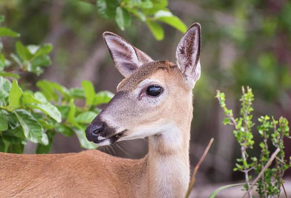 Photograph - Deerest by Alex Lapidus