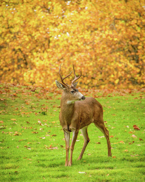 Photograph - Deer In Autumn by Marilyn Wilson