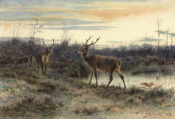 Deers In The Forest At Fontainebleau Art Print