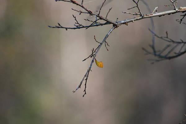 Wall Art - Photograph - Defiant Leaf by Steavon Horne