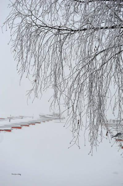 Photograph - Defying The Season by Randi Grace Nilsberg