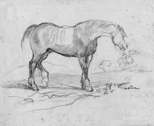 Drawing - Degas, Horse.  by Granger