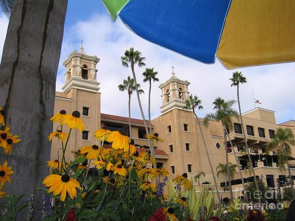 Photograph - Del Mar Daisies by James B Toy