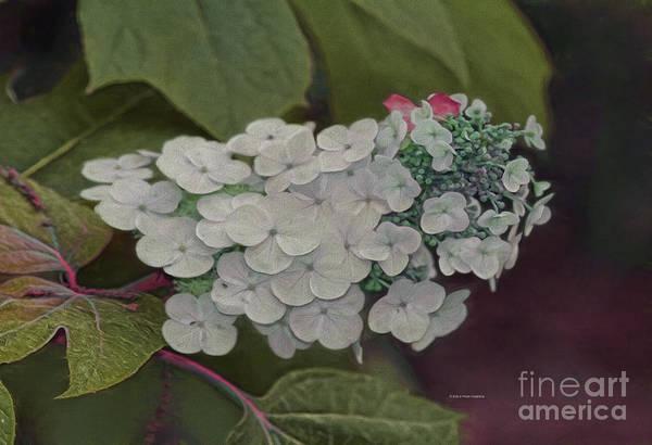 Painting - Deland Garden Gem by Deborah Benoit