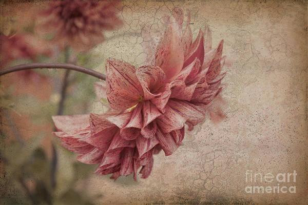 Photograph - Delia by Elaine Teague