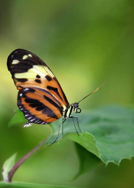 Photograph - Delicate Butterfly by Sabrina L Ryan
