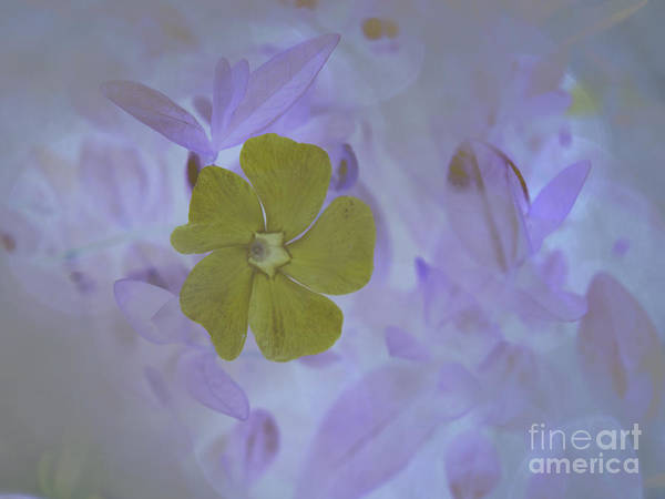 Photograph - Delicate Dreams by Brenda Kean