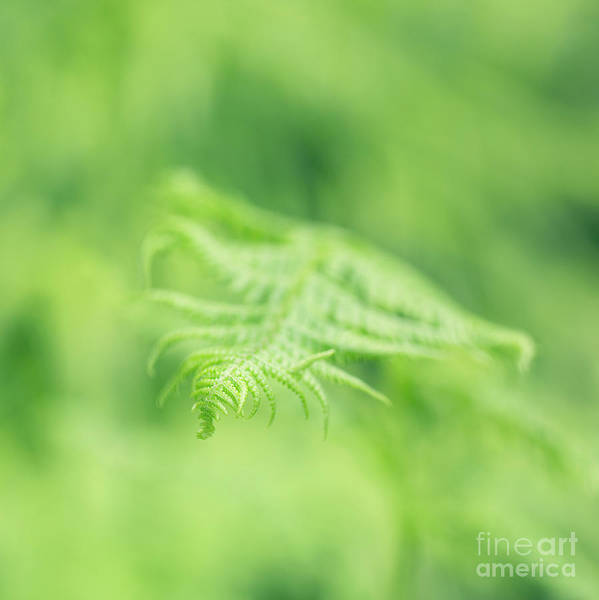 Photograph - Delicate Fern - Hipster Photo Square by Charmian Vistaunet