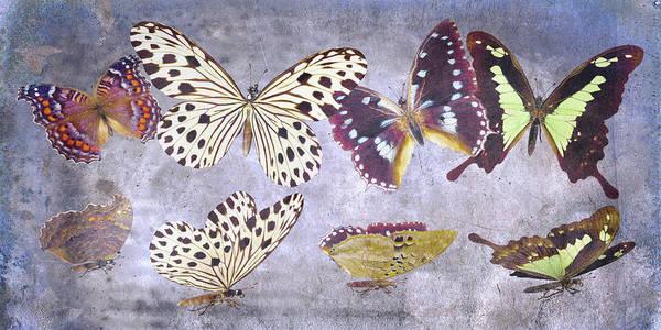 Wall Art - Digital Art - Delicate Peaceland by Betsy Knapp