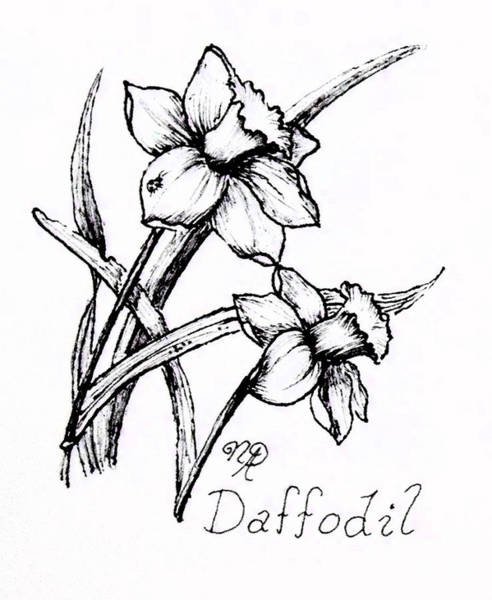 Drawing - Delightful Daffodils by Nicole Angell