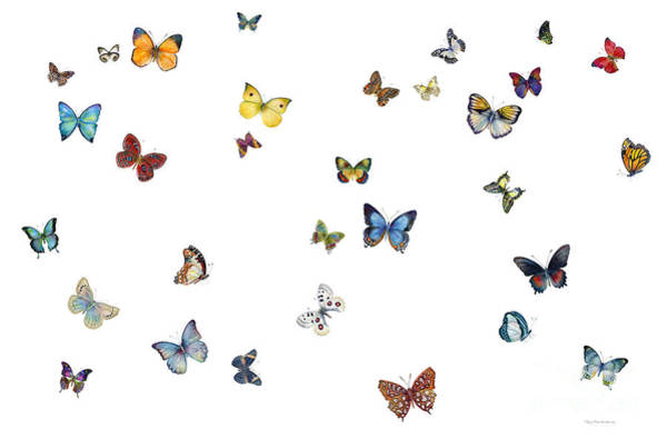 Butterfly Wall Art - Painting - Delphine by Amy Kirkpatrick