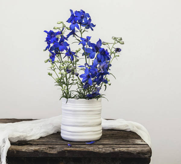 Photograph - Delphinium Blue by Kim Hojnacki