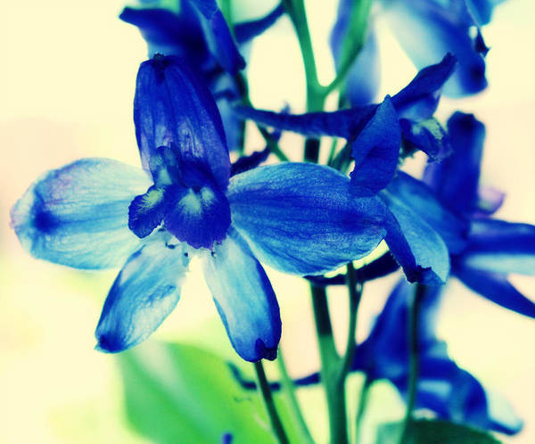Pdx Photograph - Delphinium by Cathie Tyler