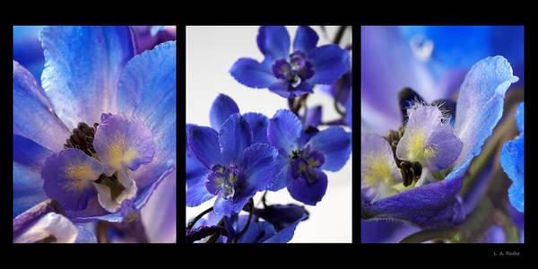 Photograph - Delphinium Study by Lauren Radke