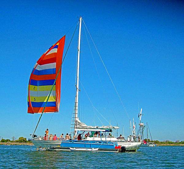 Photograph - Delta Sails N Friends by Joseph Coulombe