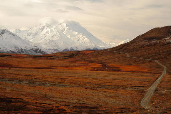Photograph - Denali And Tundra In Autumn by Steve Wolfe