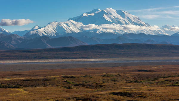 Photograph - Denali by Brenda Jacobs