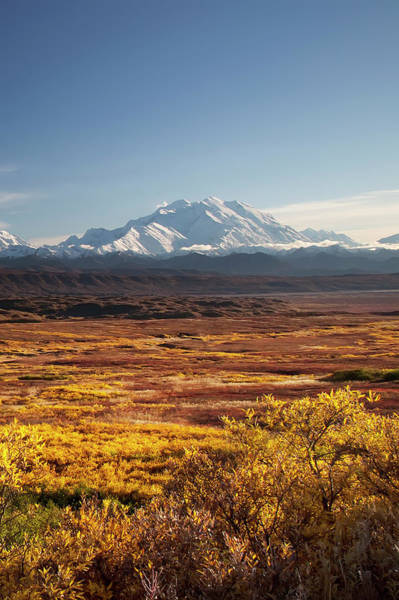 Photograph - Denali Field by Ed Boudreau