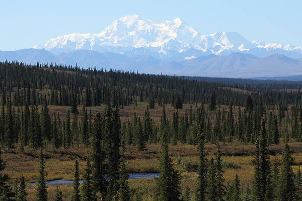 Photograph - Denali From The Denali Highway by Steve Wolfe