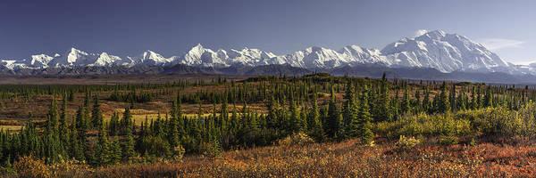 Conifer Photograph - Denali Tundra by Ed Boudreau