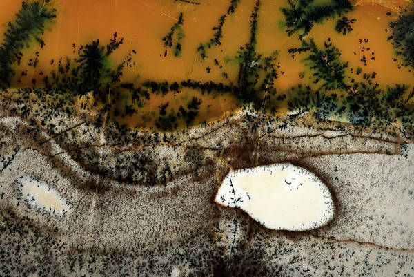 Photograph - Dendritic Agate by  Onyonet  Photo Studios