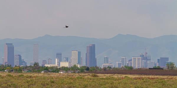 Photograph - Denver Colorado Pretty Bird Fly By by James BO Insogna