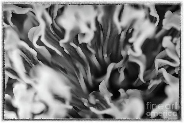 Photograph - Depths Of Spring #2 by Karen Adams