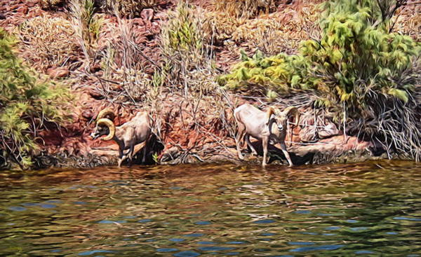 Digital Art - Desert Bighorn Sheep - Lake Havasu by Glenn McCarthy Art and Photography