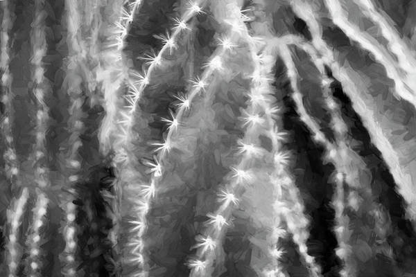 Photograph - Desert Cactus And Succulents 039 by Rich Franco