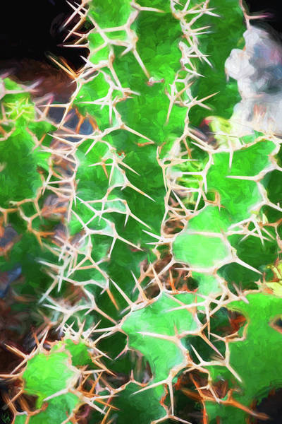 Photograph - Desert Cactus And Succulents 043 by Rich Franco