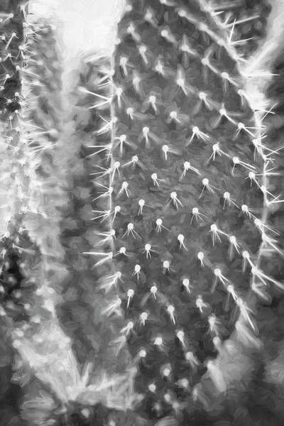 Photograph - Desert Cactus And Succulents 051 by Rich Franco