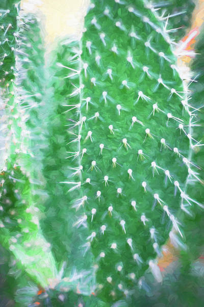 Photograph - Desert Cactus And Succulents 052 by Rich Franco