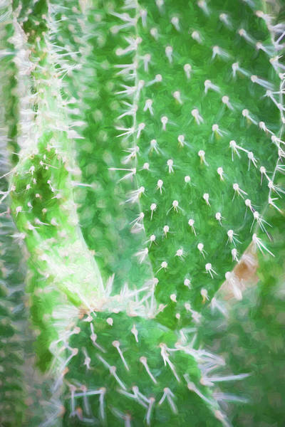 Photograph - Desert Cactus And Succulents 055 by Rich Franco