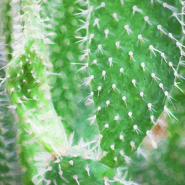 Photograph - Desert Cactus And Succulents 056 by Rich Franco