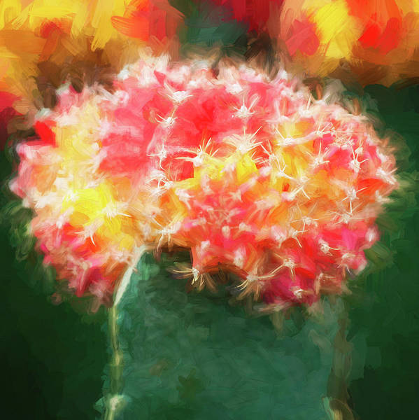 Photograph - Desert Cactus And Succulents 059 by Rich Franco